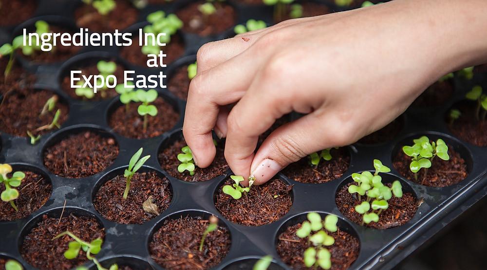 Ingredients Inc Organic
