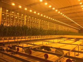 Cactus IFT at Bayer