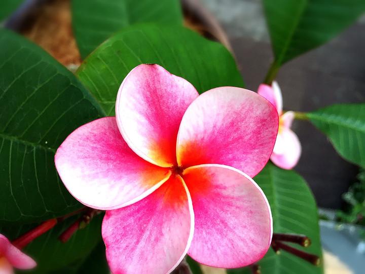 植えるカム花。