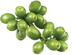 groene-koffie-boon-extract.png
