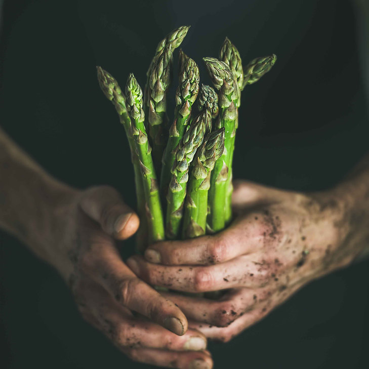 bunch-of-seasonal-green-asparagus-in-dir