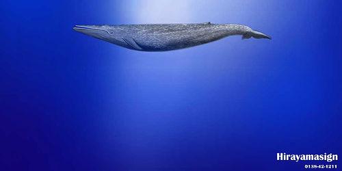 シロナガスクジラ,ターポリン,建築幕,イメージシート