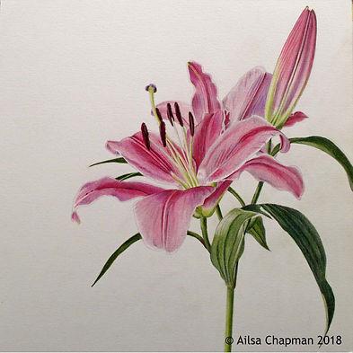Lilum (Oriental Trumpet Lily) 2 Colour.j