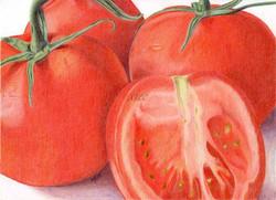 Solanum lycopersicum Tomatoes
