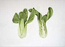 Brassica rapa pak choi.jpg