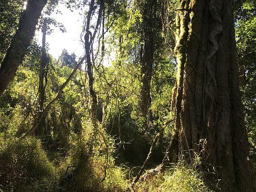 Magoebaskloof forest habitat