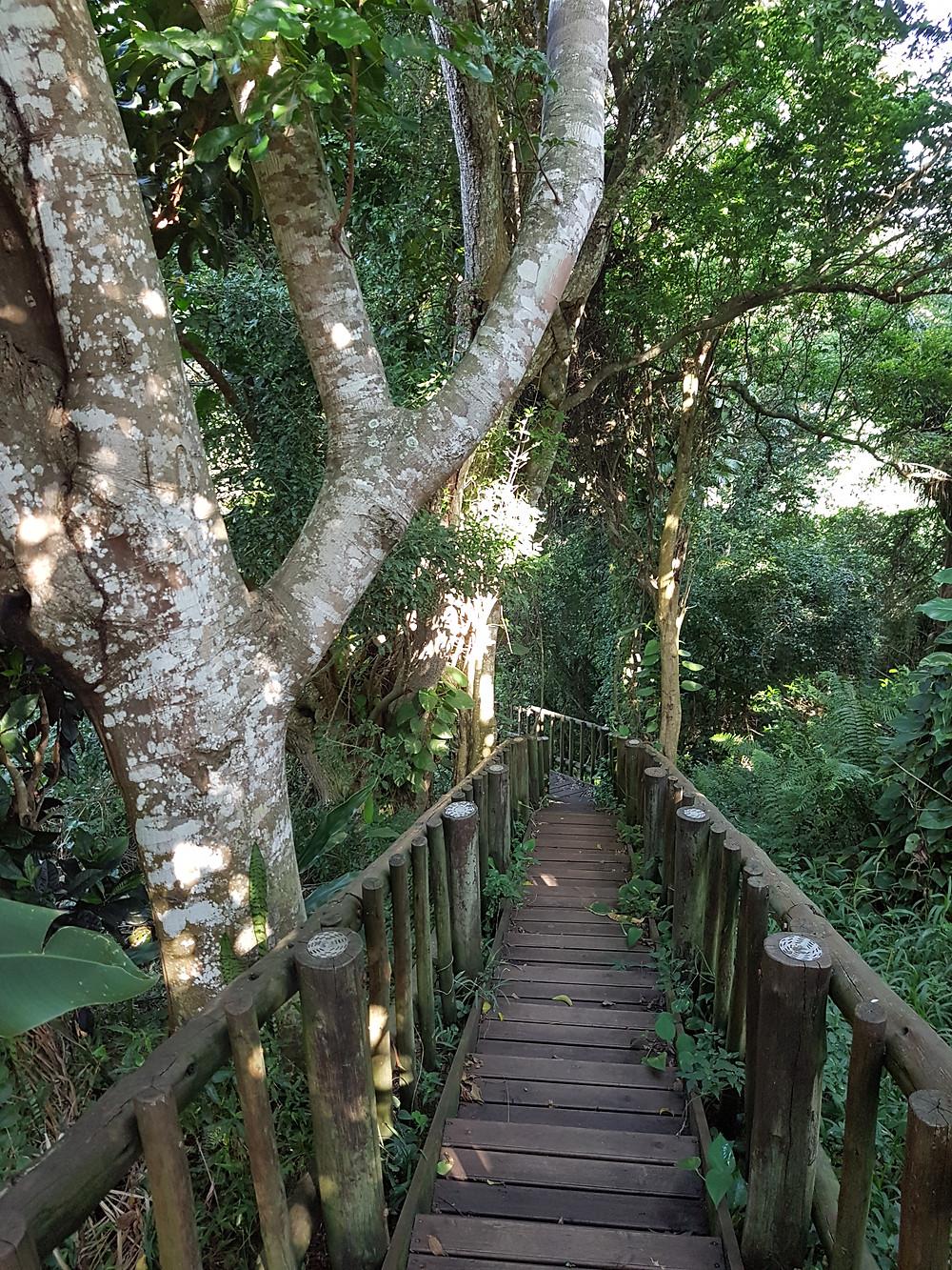 Little Eden - Walk to the Forest Deck