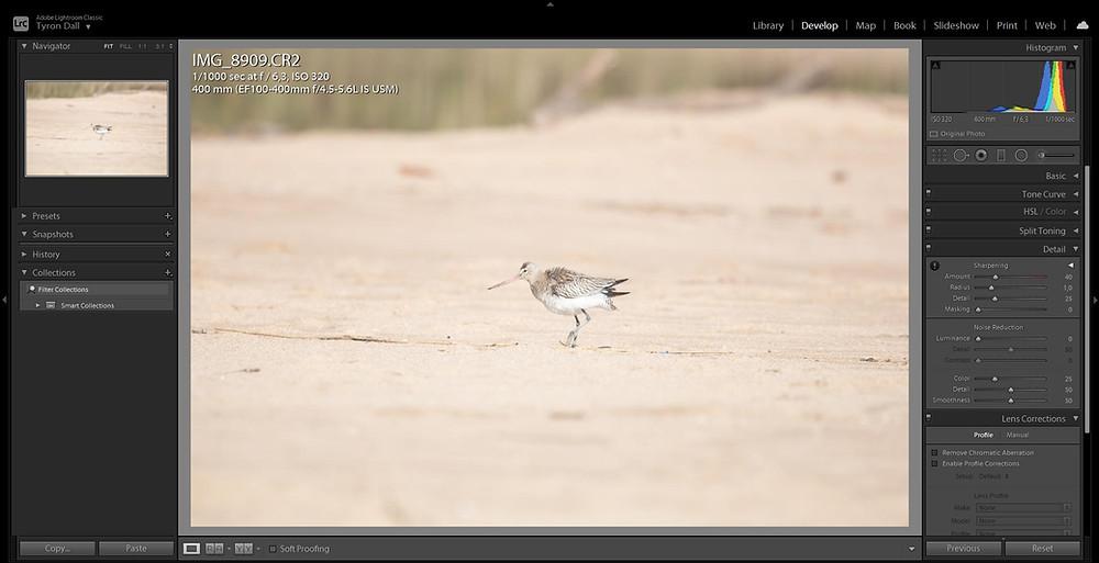 Bar-tailed Godwit - Origianl RAW photo imported into Adobe Lightroom