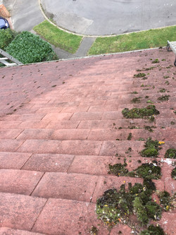 Roof cleaning windsor