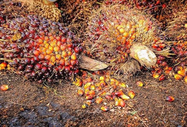 palm oil nut 2.jpg