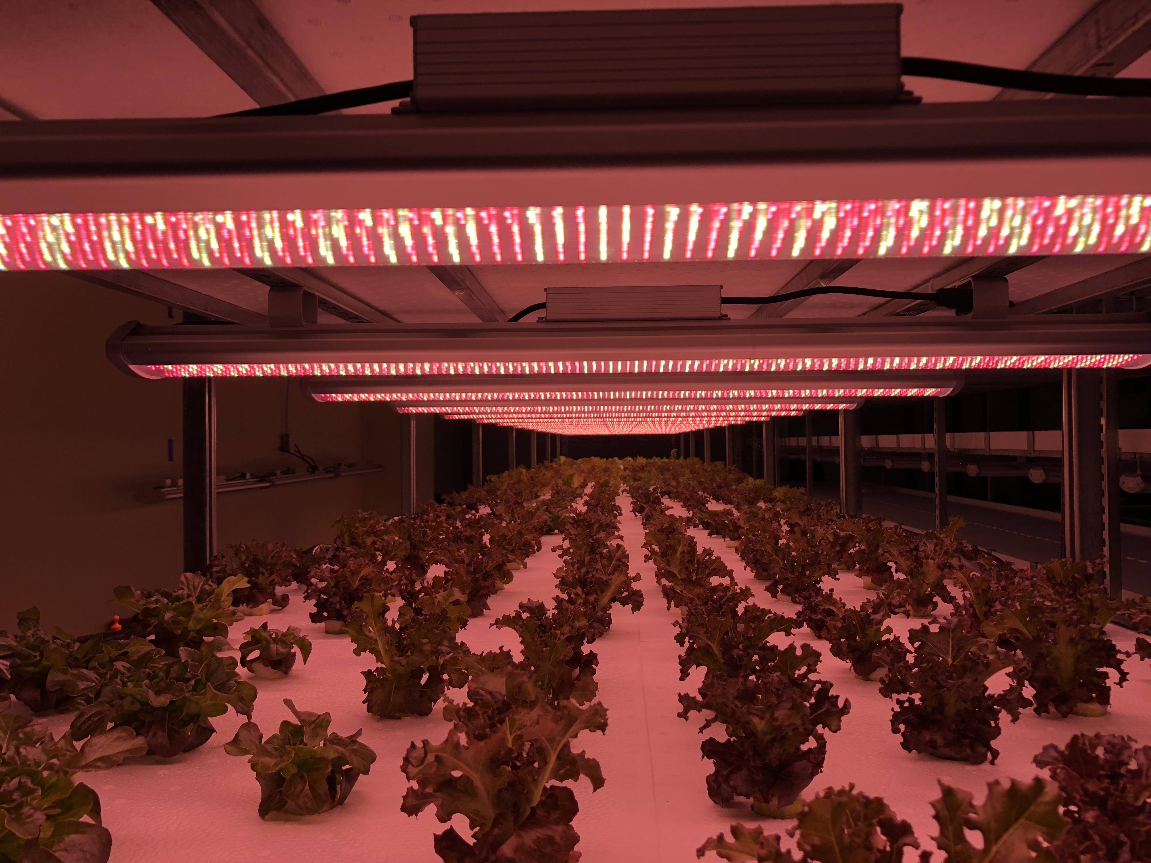 Vertical Farming LED Grow Light