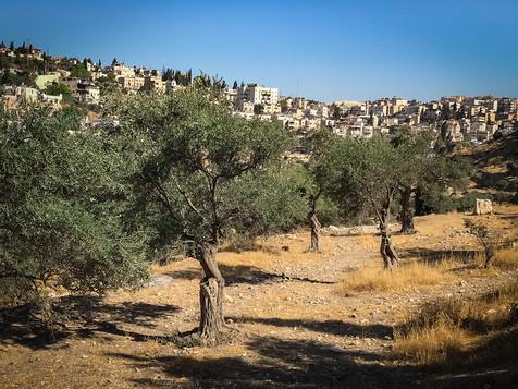 VIEW OF JERUSALEM FROM GARDEN OF GETHSEMANE