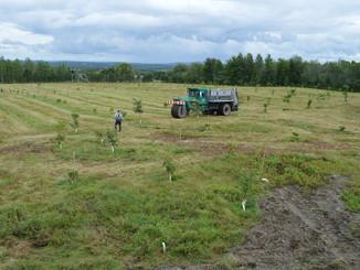 5000 arbres truffies en plantation chez ArborInnov