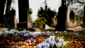 Imagem do jardim de um cemitério com flores próximo a lápides.
