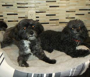 Zoey & Teddy