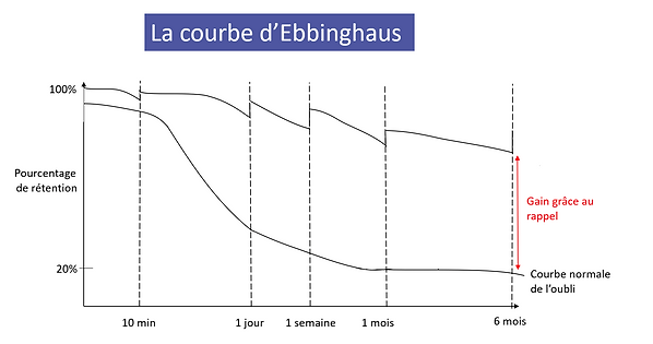 ebbinghaus.courbe.png