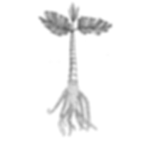 arvore-01.png