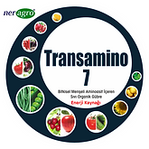 transamino 7.png