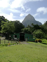 Horseback riding stables in St. Lucia