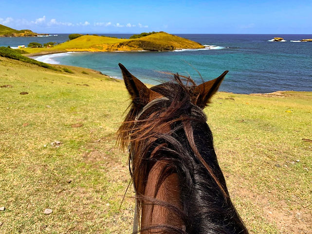 Looking over at the view on a horseback ride in st. lucia with Sandy Hoofs.