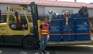 horses travelling to st. lucia
