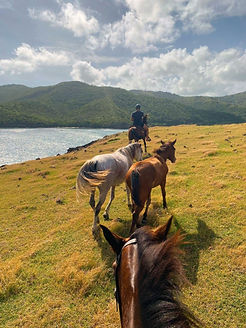 private horseback riding in st lucia at sandy hoofs