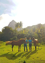 horses in st. lucia