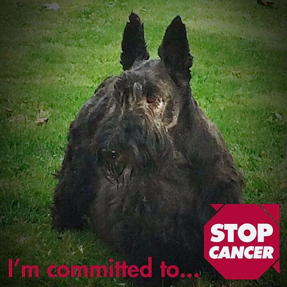 Scottie Stop Cancer.jpg