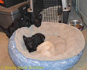 Puppies2019021602.jpg