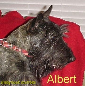 Albert001_head.jpeg