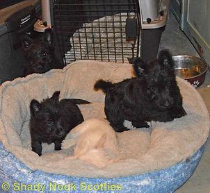 Puppies2019021601.jpg