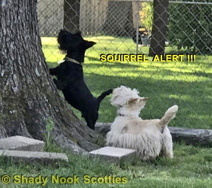 SquirrelAlert2020042001.jpg