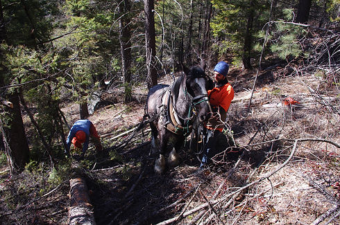Horselogging-3.jpg