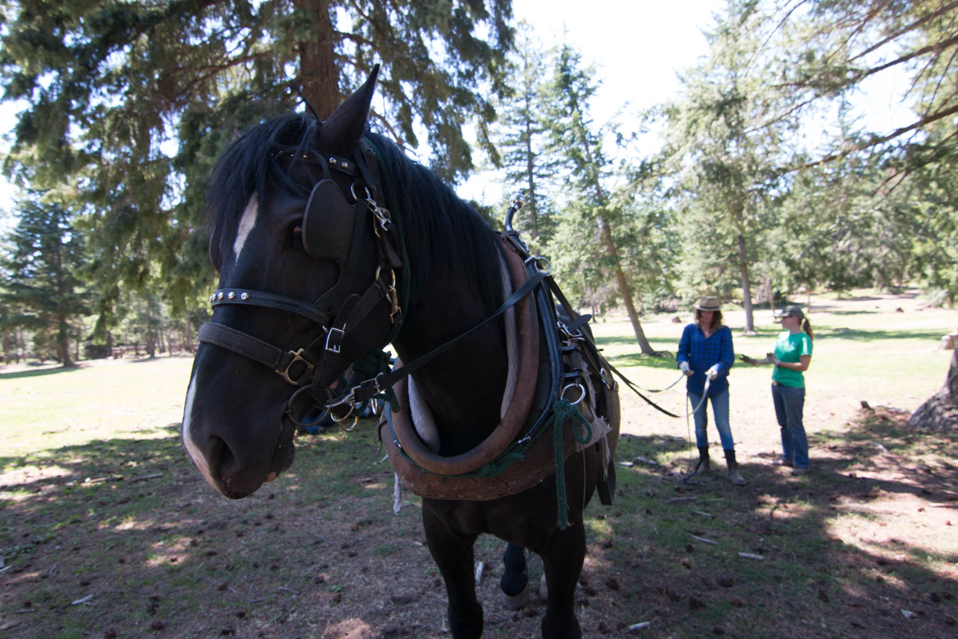 Horselogging-1.jpg