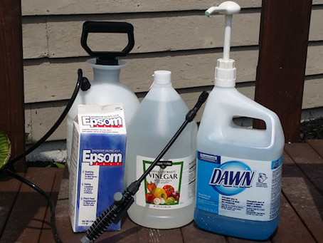 Q & A – What Do You Use For A Safe Organic Weed Killer?