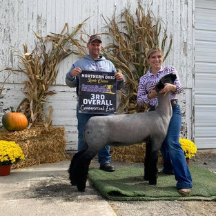 Congratulations Kendall Sattler  3rd Overall (Champion Natural) Commercial Ewe Northern Ohio Lamb Classic Bob Ross x Donor 8098 Bred by Thurston