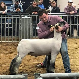 Winners | Thurston Club Lambs
