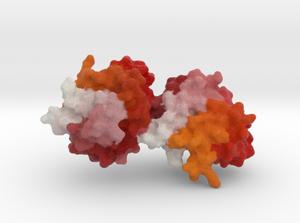 Fel d1 protein model