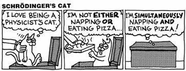 Cartoon about Schrodinger's cat eating pizza and napping