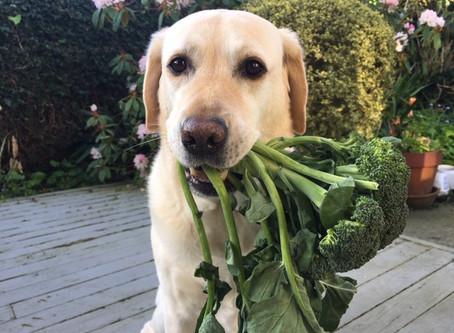 Should I feed my dog kitchen scraps?