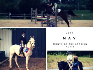 May is Arabian Horse Month