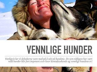 HundekjøringVennligeHunder.002.jpeg