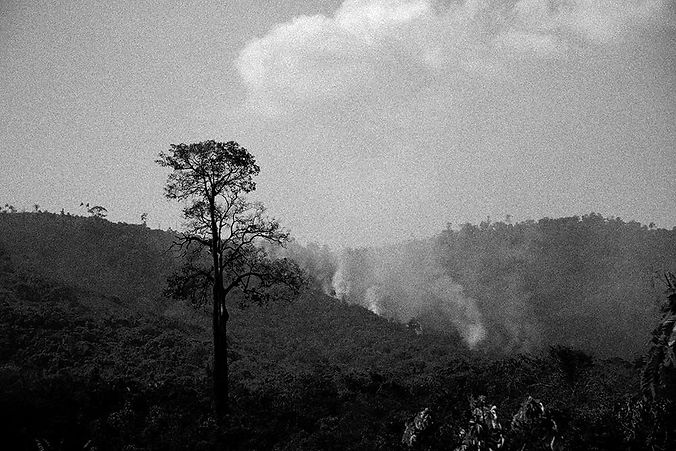 série CADERNO DE PAISAGENS AMAZÔNICAS