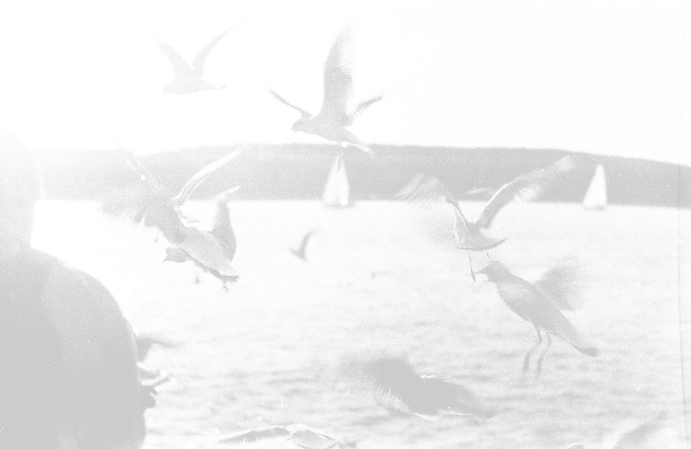 flight-of-birds-fling-near-body-of-water