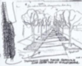 Scaleybark pavinf sketch.jpg