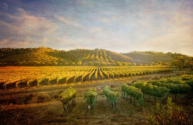 paso-robles-vineyard-120515553-5c2009b54