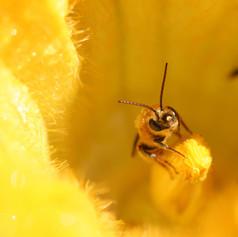 bug_bee-showercurtain.jpg
