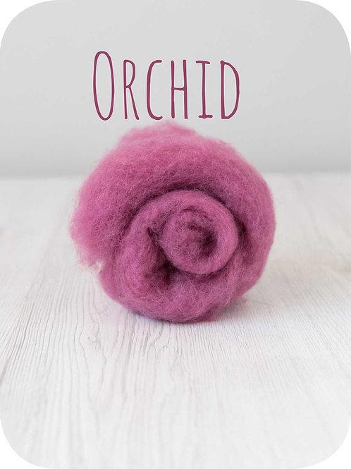 Maori Wool-Orchid