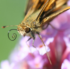 macro_moth.jpg