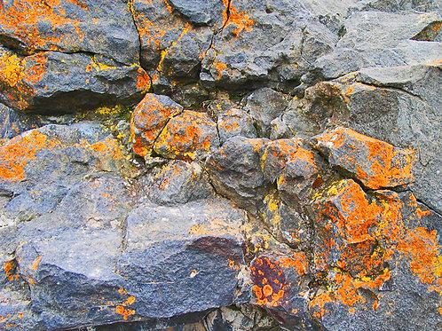 """""""Lichen on the Rocks"""" by Cindy Medlynn"""